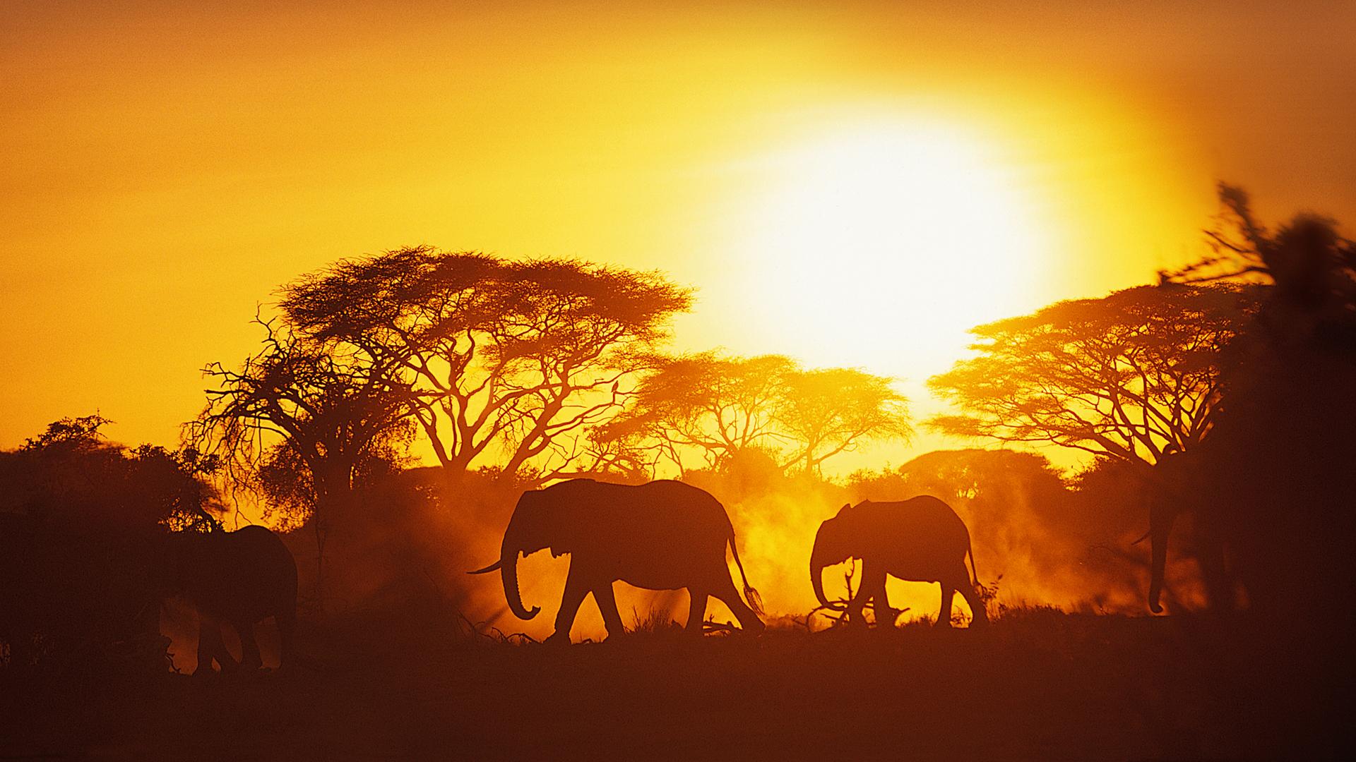 South Africa Safari Carrier